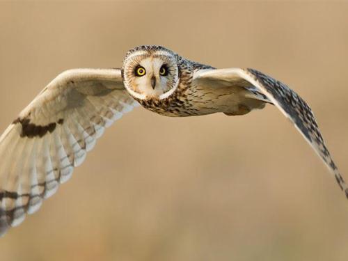 Owl Flying | ADMIRAL SIMS B&B, Newport Rhode Island
