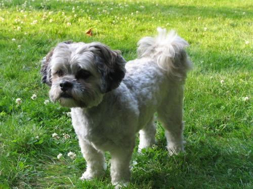 Dog on the grass | Admiral Sims House Vacation Rental, Newport Rhode Island